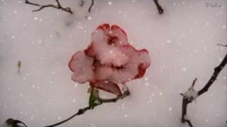 Leise rieselt der Schnee - Weihnachtsmusik - Weihnachtslied
