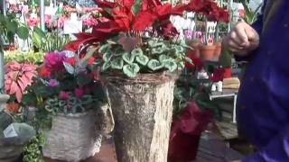 Do-it-yourself Holiday Gift: Plants With Flair