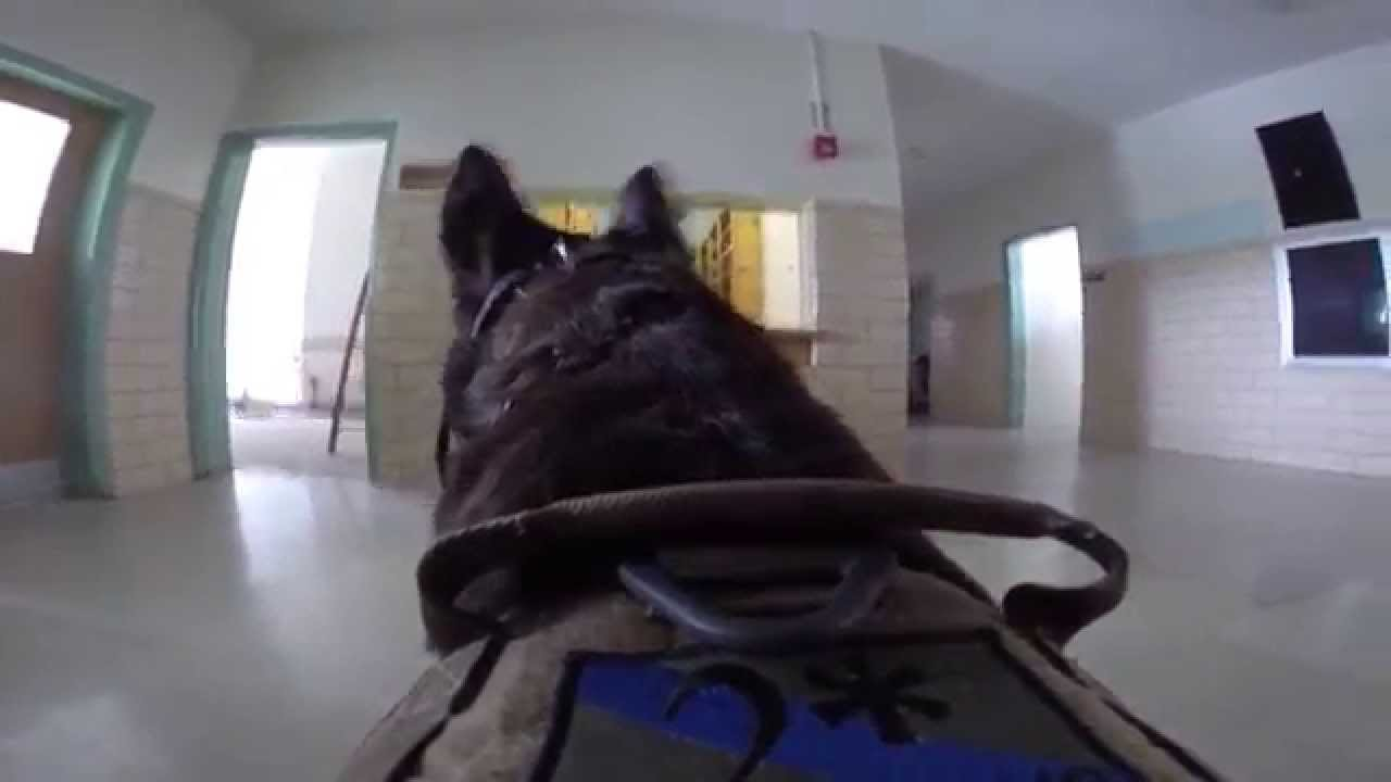 K9 Torres Building Search