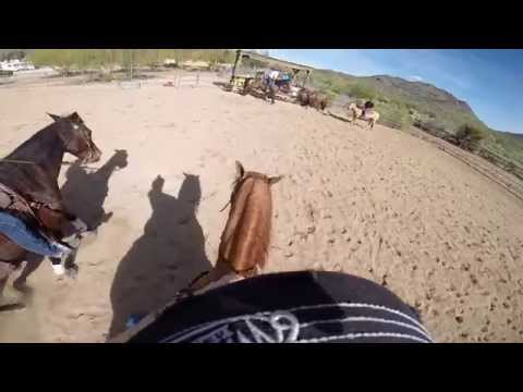 4 Steps for Training a Horse for Mounted Shooting