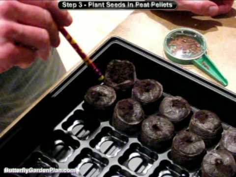 Grow Seeds Indoors | Seed Germination | Jiffy Peat Pellets