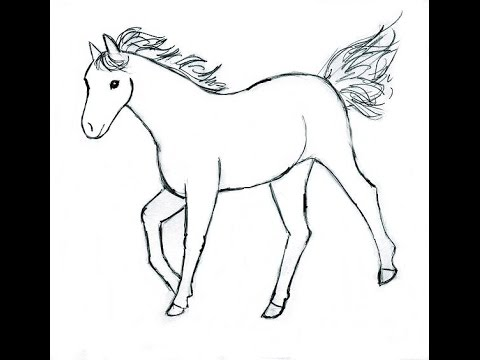 How To Draw A Horse   Baby Horse In Simple Steps