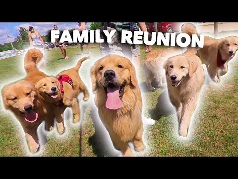 My Dog Has a Family Reunion Party!