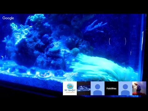 Wedsnesday  Live Stream Q& A | Email Your Question To FishOfHex@gmail.com