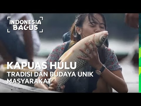 Tradisi dan Budaya Unik Masyarakat Kapuas Hulu - Indonesia Bagus