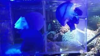 Рынок аквариумных рыбок в Урумчи(Китай, 2014 год Music: Adam Certamen Bownik - Copernicus., 2015-01-09T18:35:58.000Z)