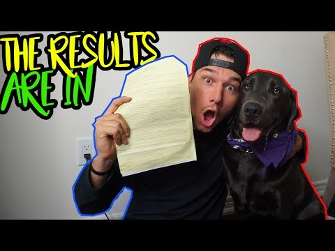 the truth about my dog (DNA RESULTS ARE HERE) Mp3