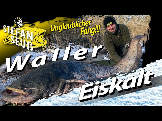 XXL WINTER-WALLER bei Eis und Schnee | WELSANGELN unter dem Gefrierpunkt mit U-Pose und Köderfisch