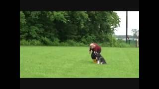 Talon (siberian Husky) Obedience Training Video
