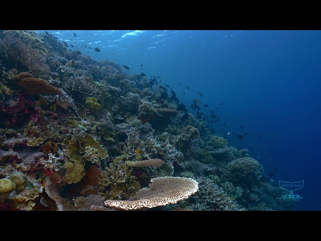Take a Minute VII: Healthy and diverse coral reef