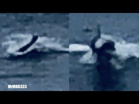 """Man spots 'strange sea creature' near Huntington Beach - """"Unrecognizable"""""""