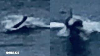 Man spots 'strange sea creature' near H...