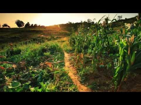Alexie Divello feat. Daniela - Children Of The Sun (Official Lyric Video)