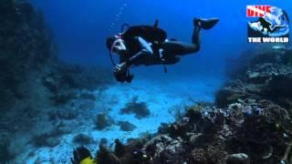 Tauchen Fidschi, Tauchen in Taveuni, Bligh Water und die Koro See: Haie, Mantas, Tintenfische