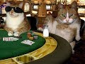 Funny Animals Gambling Cat - Hilarious