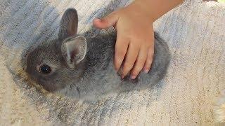 KRÓLIKI – Jak uspokoić królika?
