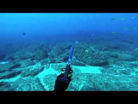 Spearfishing and Freediving Northern NSW and South East QLD