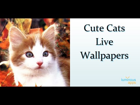 Cute Cats Live Wallpapers - Apps on Google Play