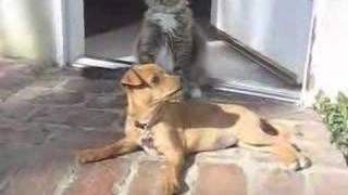 Cutest Cat and Dog Best Friends