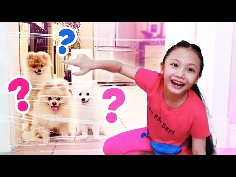 Pranking My Dogs with Invisible Wall | Bug's Dog Talk