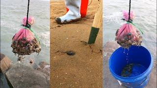해산물 잡기 2021,해산물을 잡아서 파고 해변에서 …