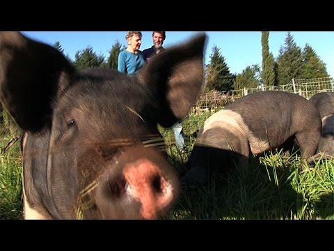 The Animals are Allies at Inspiration Farm