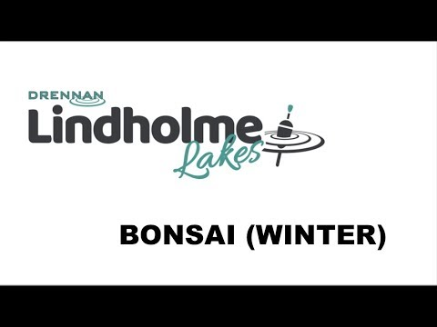 Guide To Drennan Lindholme's Bonsai Pool (Winter)