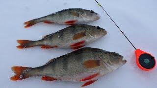 Ловля Крупного Окуня на озере. Зимняя рыбалка 2020.