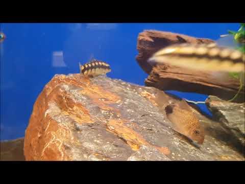 10 Fische für Aquarien ab 100-200 Liter | Teil 2