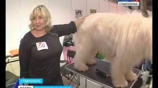 В Ставрополе прошла выставка интернациональных собак