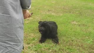 モアナの休日、公園で遊びました。
