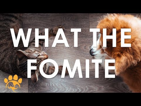 What the Fomoite Training | Peggy Adams Animal Rescue League