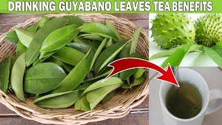 WHAT ARE THE HEALTH BENEFITS OF DRINKING GUYABANO LEAVES TEA?