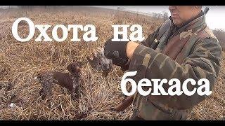 Охота на бекаса, ТОЗ-34