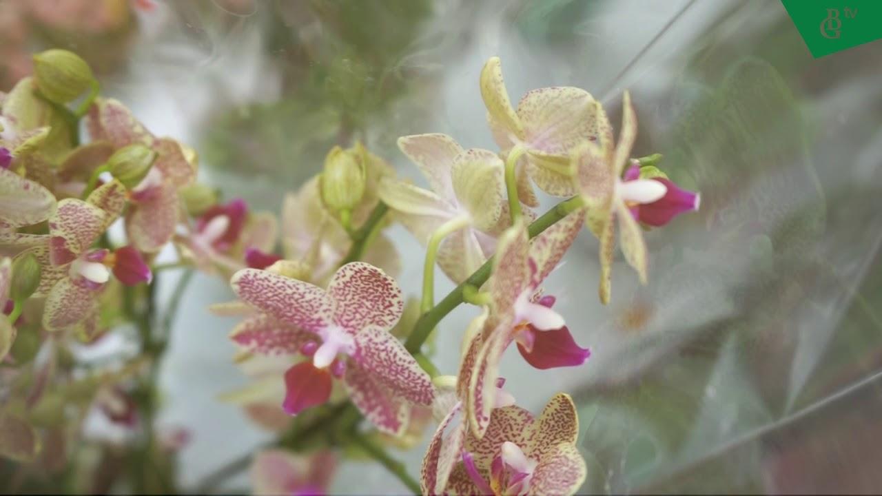Классный видеоролик о комнатных растениях