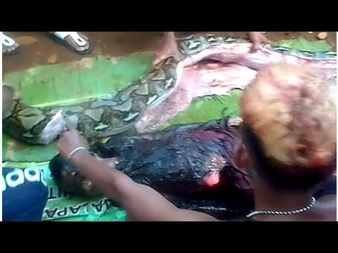 Una pitón gigante se traga a una mujer en Indonesia