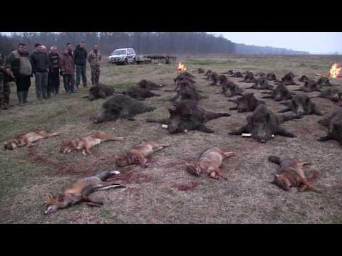 Wild Boar Driven Hunt In Romania,Battue Aux Sangliers En Roumanie,Schwarzwild Treibjagd In Rumänien