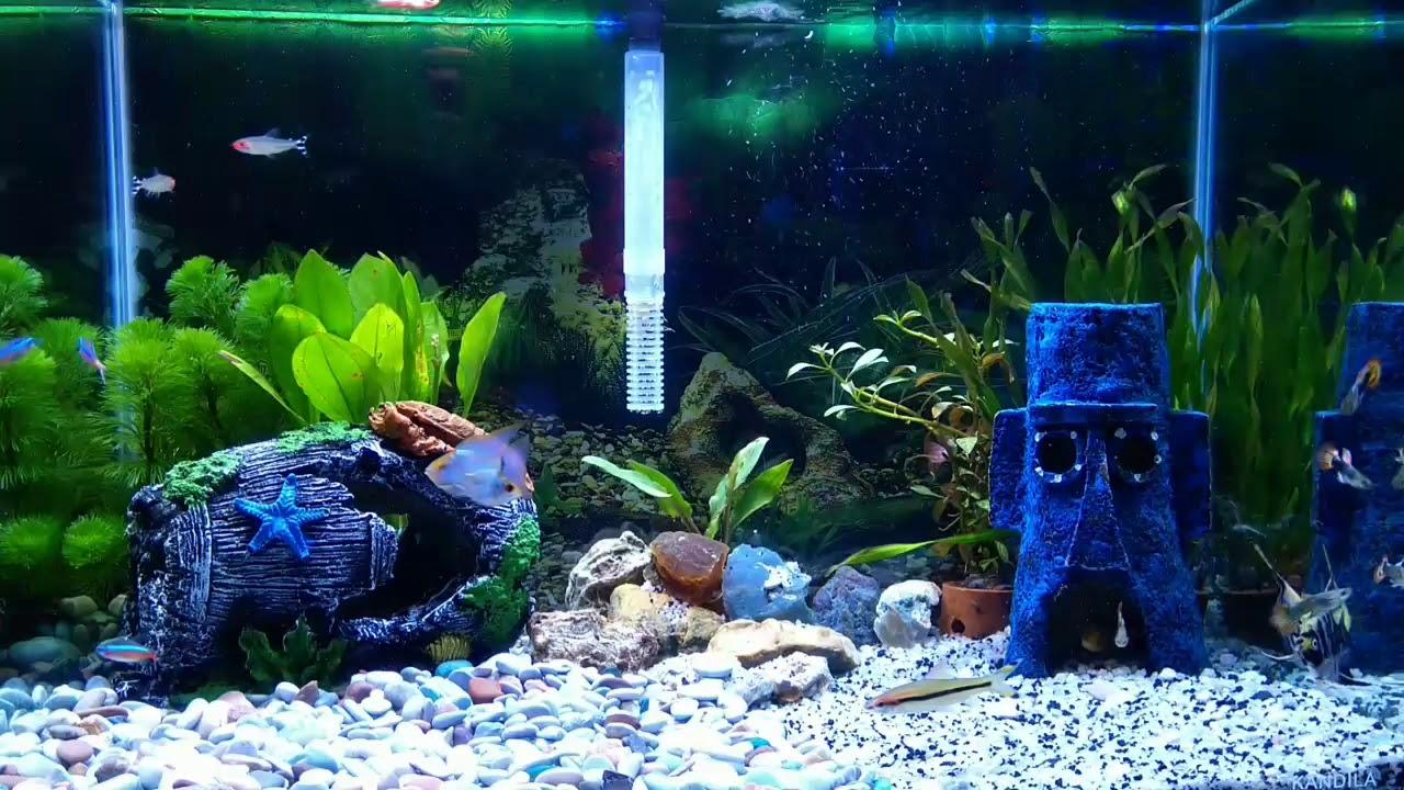 Aquascape aquarium dengan suara gemercik air untuk ...