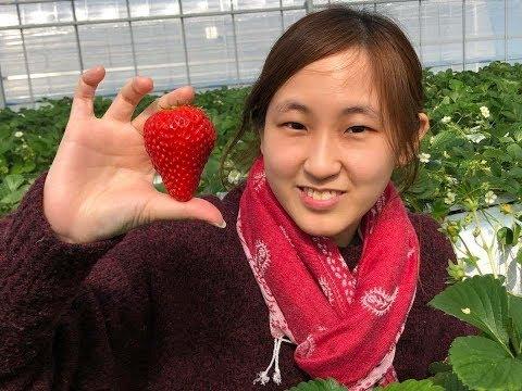 Strawberry Terenak, Termanis, Terbesar Di Jepang