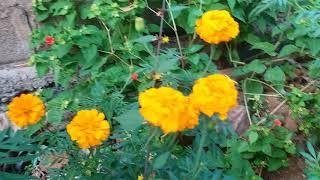 Beautiful flowers  (banthi)         samsung galaxy c7 pro  mobile quality