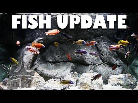 AQUARIUM FISH UPDATE