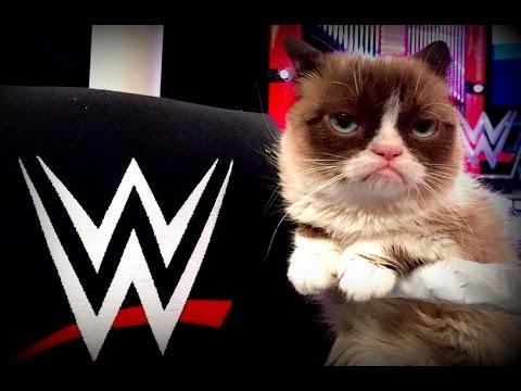 WWE Grumpy Cat RAW / Survivor Series Preview / Rowan & Harper Make Impact