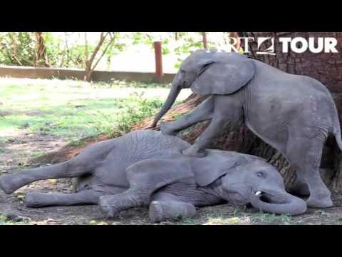 Elephants of Mfuwe Lodge Zambia