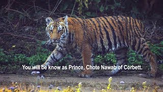 RIP Prince - Chote Nawab of Corbett - We will miss you