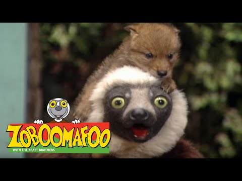 Zoboomafoo Zoboos Scary Tails Worldnews