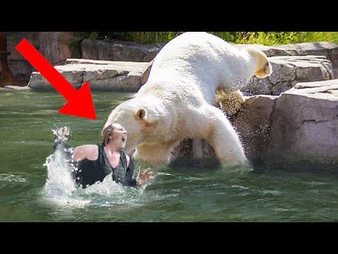 11 Zoo Animal Attacks