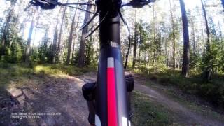 QStar RS9 General 1920x1080-30, лес, солнечный вечер