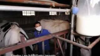 Milchpulver-Skandal in China: Opfer kritisieren Hilfsfonds