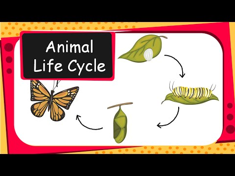 Science - Animal life cycles - English - YouTube