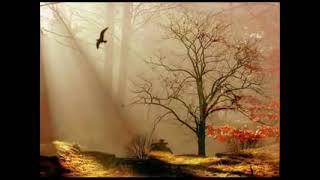 Cahit Berkay - Ardakalan Fon Müziği